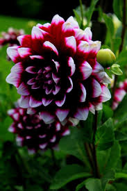 102 best le fleurs images on pinterest nature flowers and