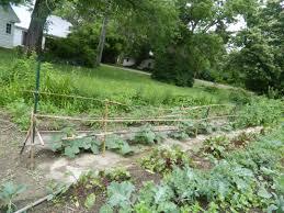 kale glory garden