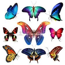 colorful butterfly stock photos royalty free business images