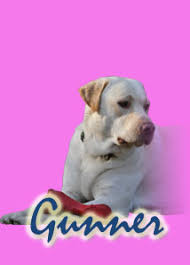 Canine Creature Comforts Smoky Mountin Canine Obedience Creature Comfort