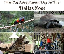plan an adventurous family day at the dallas zoo