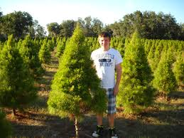 florida sand pine the christmas tree choice of the year fresh