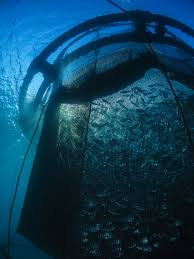 noaa expands opportunities for u s aquaculture