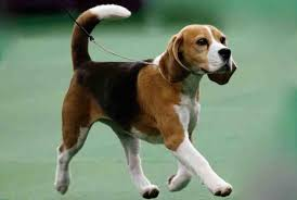 best family dogs find the best breed for your family k9rl