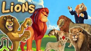 lions finger family song simba alex real and cartoon lions
