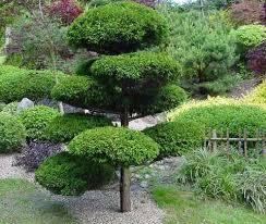 plants for japanese gardens build a japanese garden uk