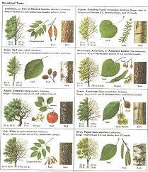 25 unique tree leaf identification ideas on leaf