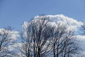 file 2015 04 05 140925 leafless trees clouds bad rappenau jpg