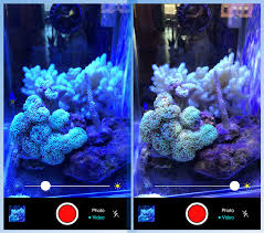 Reef Aquarium Lighting The Aquarium Camera App Is An Essential Tool For Reef Tank