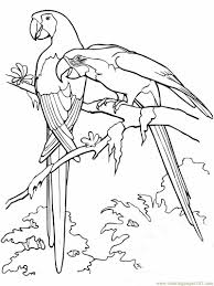 scarlet macaws coloring page free parrots coloring pages