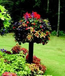 shade gardening begonia u0027dragon wings red u0027 vigorous begonia