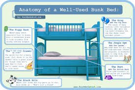 Anatomy Of A WellUsed Bunk Bed Infographic Facts - History of bunk beds
