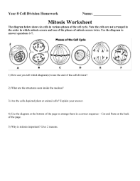 Mitosis And The Cell Cycle Worksheet The Cell Cycle Worksheet Manhasset Schools