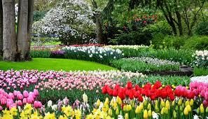 Netherlands Tulip Fields Tiptoe Through The Tulips In Keukenhof Gardens In The Netherlands