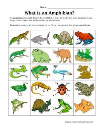 amphibian classification worksheet have fun teaching