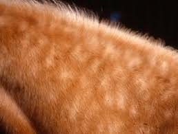 Will Lice Treatment Ruin Hair Color Lice Alert The Horse Owner U0027s Resource