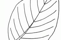 free deer coloring pages aecost net aecost net