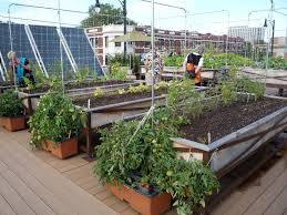 garden beautiful how to build a rooftop garden with small space