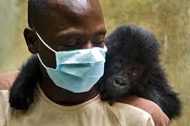 the official website of virunga national park support gorilla