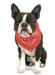 things deb dogs wearing bandanas