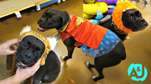 matching dog and owner halloween costumes cute puppy halloween costumes youtube