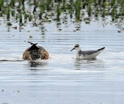 the rspb minsmere recent sightings