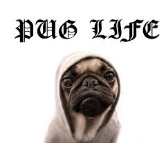 what kind of pug are you playbuzz