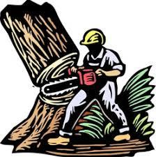 affordable tree service crossville tn timbers tree service dayton tn 37321 homeadvisor