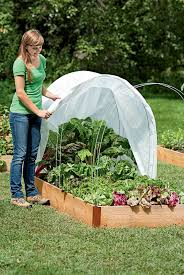 gardening wives u0027 tales which ones really work mini greenhouse