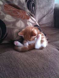 Sleeping Cat Meme - the 25 most awkward cat sleeping positions