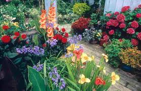 colorful flowers for impressive small backyard garden idea
