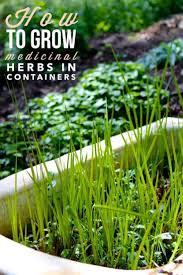organic kitchen gardening picmia