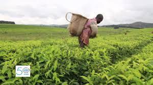 small plant supports unido supports development of small hydro power plants in nigeria