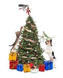 dog cat christmas stock photos u0026 pictures royalty free dog cat