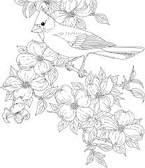 free printable coloring page virginia state bird and flower