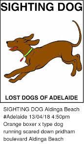 Orange Dog Meme - sighting dog lost dogs of adelaide sighting dog aldinga beach