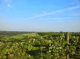 Joy U0027s Joy Of Wine Ten Tips For Planning The Perfect Vineyard Wedding