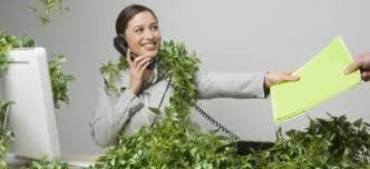 plantes bureau les plantes depolluantes pour le bureau
