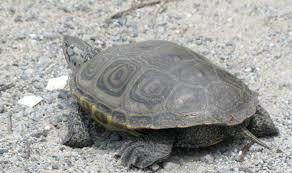 don u0027t dump your turtle backyard and beyond