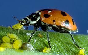 welcome to ladybug indoor gardens