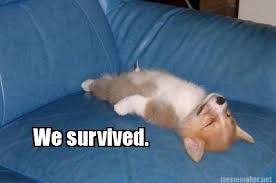 Nyquil Meme - meme maker we survived2