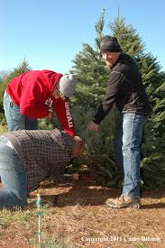 christmas tree farm nj christmas lights decoration