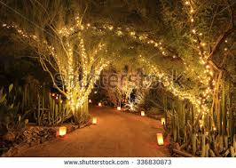 Christmas Lights Decorations Winding Path Among Trees Decorated Christmas Stock Photo 90709561