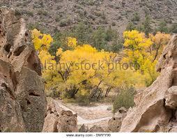 Cottonwood Tree Flowers - cottonwood trees stock photos u0026 cottonwood trees stock images alamy