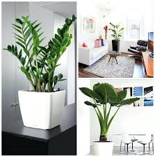 Artificial Plants Home Decor Artificial Plants For Home Decor Bangalore Artificial Plants For
