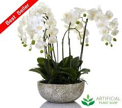 blue orchids for sale orchids view artificial orchids that look real uk