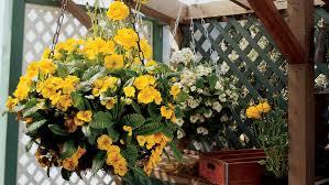 Flower Pot Arrangements For The Patio Best Winter Flowers For Color Sunset