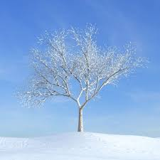 bare tree on a snow covered hillside in the winter 3d model obj