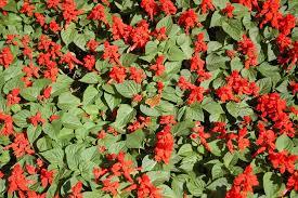 a winter hanging basket hgtv lunch u the flower house garden