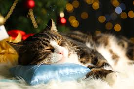 keeping your cat safe during the holidays hill u0027s pet